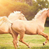 Triple R Horse Rescue's 5th Annual Have a Heart for Horses