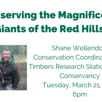 Conserving the Magnificent Giants of the Red Hills