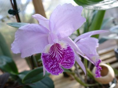 Tallahassee Orchid Society