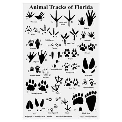 What's That Animal Track?