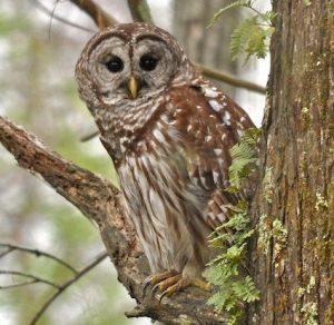Mr. Owl, What's for Dinner?