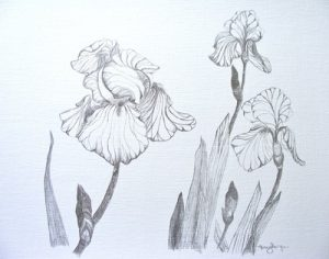 Botanical Silverpoint Workshop