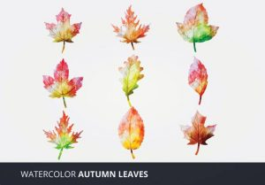 Seniors: Senior Moments Class | Watercolor Autumn Leaves