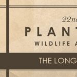 The Longleaf Affair - Plantation Wildlife Arts Festival 2017