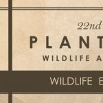 Wildlife Encounters- Plantation Wildlife Arts Festival