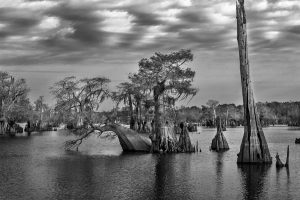 Vanishing Florida - Gallery Talk with Kevin Boldenow