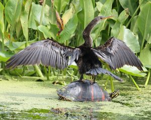 Anhinga Press: Poetry Reading