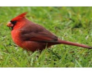 Great Backyard Bird Count at Maclay Gardens
