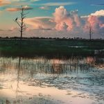 Call for Artists: Florida Environs - Photography E...
