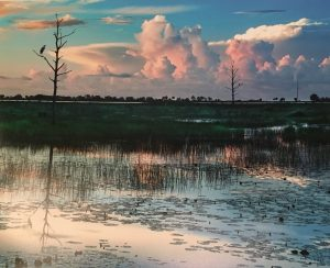 Call for Artists: Florida Environs - Photography Exhibit