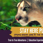 Spring Break Family Programming at the Tallahassee Museum