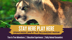 Spring Break Family Programming at the Tallahassee...