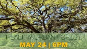 Healthy Urban Forest
