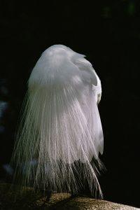Jim Miller: Birds of Paradise