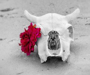 Flowers and Skulls