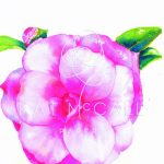 Adult Workshop | Watercolor Camellia