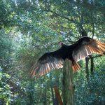 K - 1st Grade Camp: Vulture Awareness Day