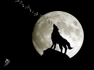 Full Moon Concert
