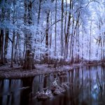 Opening Reception for Transcend the Ordinary: Infrared photographs by Michael Riffle