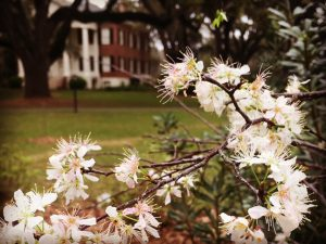 History Happy Hour: Native Plant Month