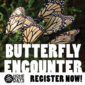 Home School Days - Butterfly Encounter
