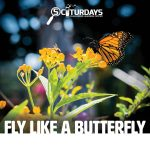 SCIturdays - Fly Like a Butterfly