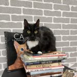Grand Opening: Fat Cat Bookstore and Cat Adoption Center
