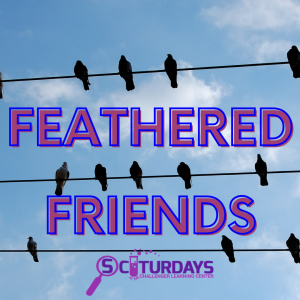 Sciturdays - Feathered Friends