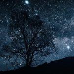 Shakespeare Uncorked Light on a Midsummer Night