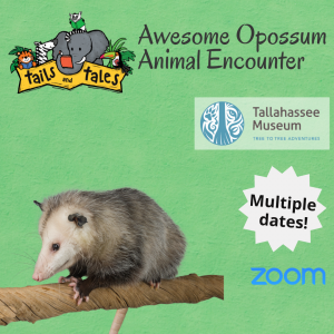 Awesome Opossum Animal Encounter