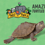 Amazing Animals: Turtles & Tortoises- Have Shell Will Travel/Gopher Tortoise-Nature's Landlord