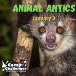 "Winter Day Camp: Jan 3 ""Animal Antics"" & Jan 4..."